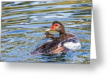 Muscovy Hen Greeting Card