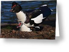 Muscovy Lovers Greeting Card