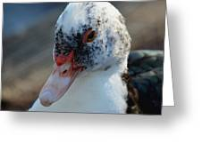 Muscovy Portrait 2013 Greeting Card