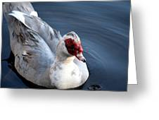 Muscovy Study 2013 Greeting Card