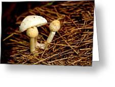 Mushroom 3 Greeting Card