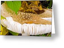 Mushroom Abstract # 2 Greeting Card