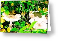 Mushroom Abstract # 3 Greeting Card