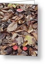 Mushroom And Leaves Greeting Card
