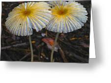 Mushroom Flowers Greeting Card