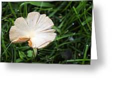Mushroom Growing Wild On Lawn Greeting Card
