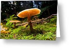 Mushroom Heaven 8 Greeting Card