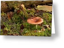 Mushroom N Moss Greeting Card