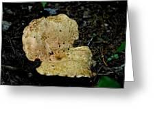 Mushroom Supreme Greeting Card