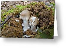 Mushroom Twins - As Youngsters Greeting Card
