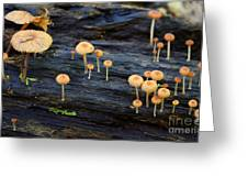 Mushrooms Amazon Jungle Brazil 4 Greeting Card