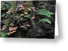 Mushrooms In Fern Canyon Greeting Card