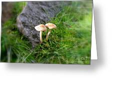 Mushrooms In Grass Greeting Card
