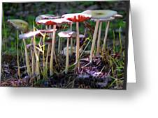 Mushrooms In Sunlight Greeting Card