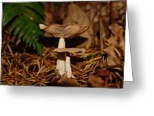 Mushrooms Greeting Card