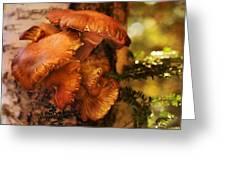 Mushrooms Untitled 2754 Greeting Card