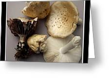 Mushrooms With Watercolor Effect 5 Greeting Card