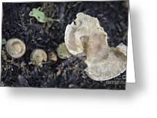 Mushy Mushrooms Greeting Card