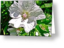 Musk Mallow Along Trail To Cap Gaspe In Forillon National Park-quebec  Greeting Card