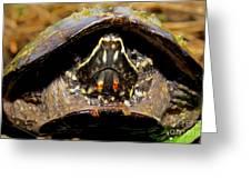Musk Turtle Macro Greeting Card