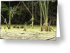 Muskrat Family Greeting Card