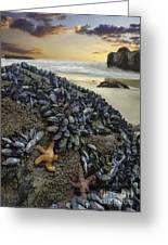 Mussel Beach Greeting Card