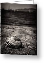 Mussel On The Beach Greeting Card
