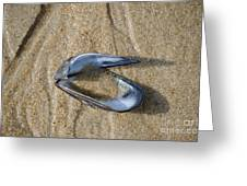 Mussel Shell On The Beach Greeting Card