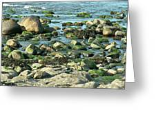 Mussels And Moss Greeting Card