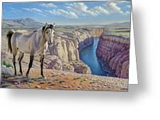 Mustang At Bighorn Canyon Greeting Card by Paul Krapf