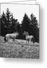 Mustang Challenge 6 Bw Greeting Card by Roger Snyder
