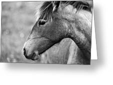 Mustang Close 1 Bw Greeting Card by Roger Snyder