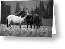 Mustangs Grooming 1 Bw Greeting Card by Roger Snyder