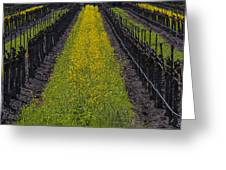 Mustard Grass In Vineyards Greeting Card