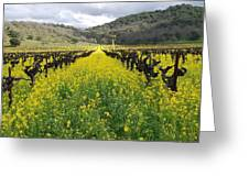 Mustard In The Vineyard Greeting Card