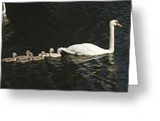 Mute Swan Cygnus Olor Parent Greeting Card