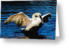 Mute Swan Majesty Greeting Card