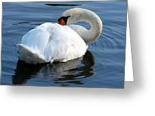 Mute Swan No. 2 Greeting Card