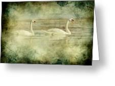 Mute Swan Pair Greeting Card