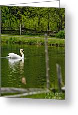 Mute Swan Pictures 195 Greeting Card