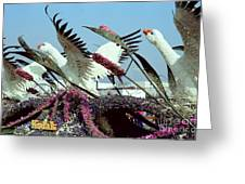 Mute Swans Rose Parade Float By Kodak Greeting Card