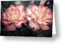 Muted Pink Roses Greeting Card