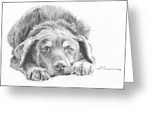 Mutt Pencil Portrait Greeting Card