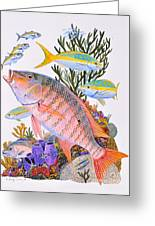 Mutton Snapper Reef Greeting Card