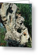 My Best Olive Tree Friend  Home Privat Spain Since 1999 Greeting Card