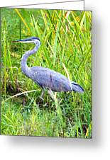 My Blue Heron Greeting Card by Greg Fortier
