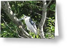 My Blue Heron Greeting Card