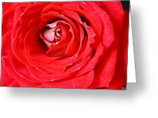 My Delicate Rose Greeting Card
