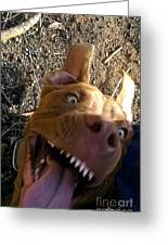 My Dog Smile Greeting Card