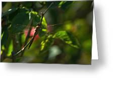 My Dragonfly Greeting Card